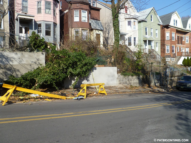downed_tree_dpw