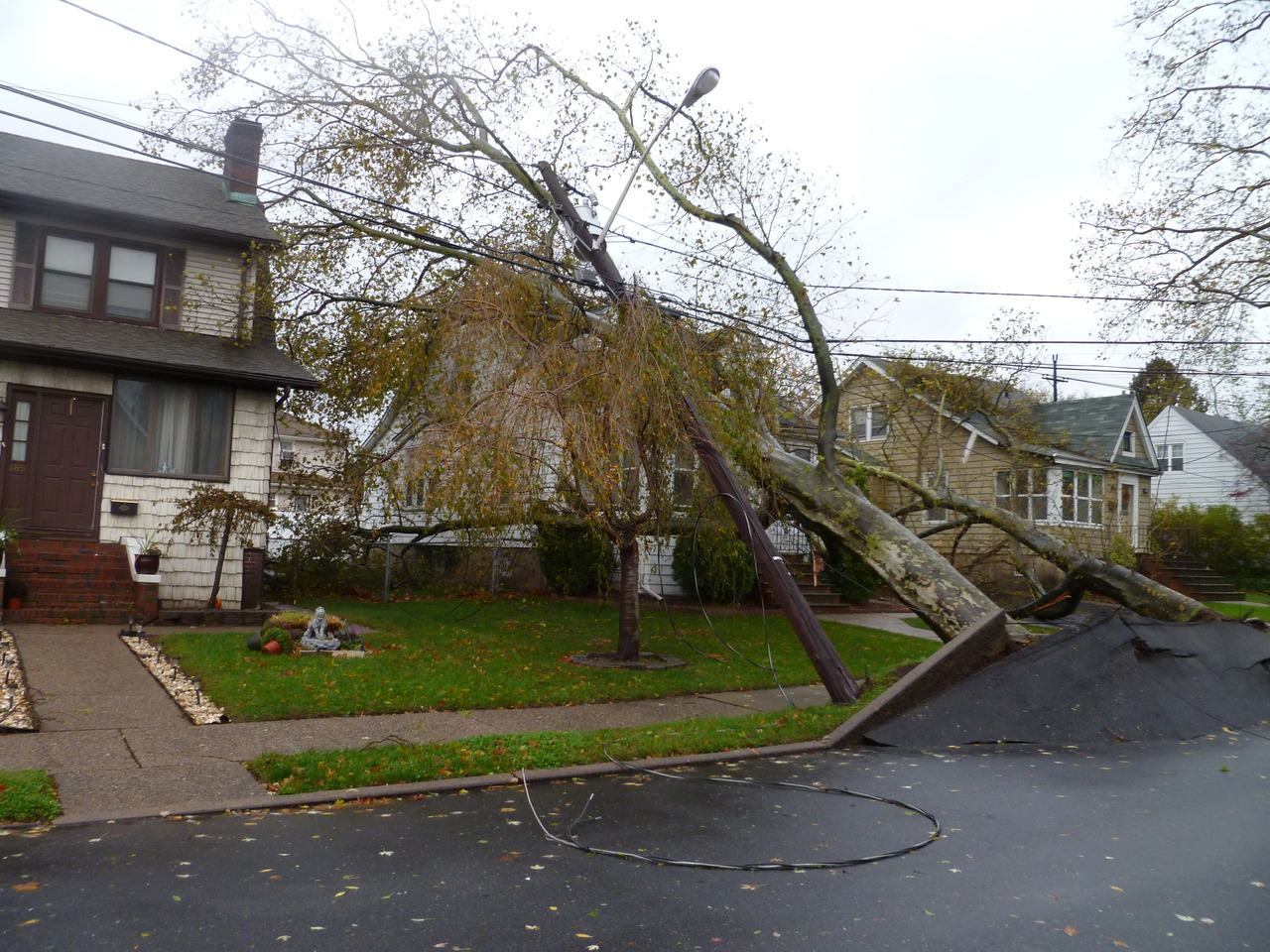 downed_trees_hill_crest