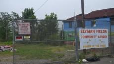 Elysian Fields Community Garden behind School 5.