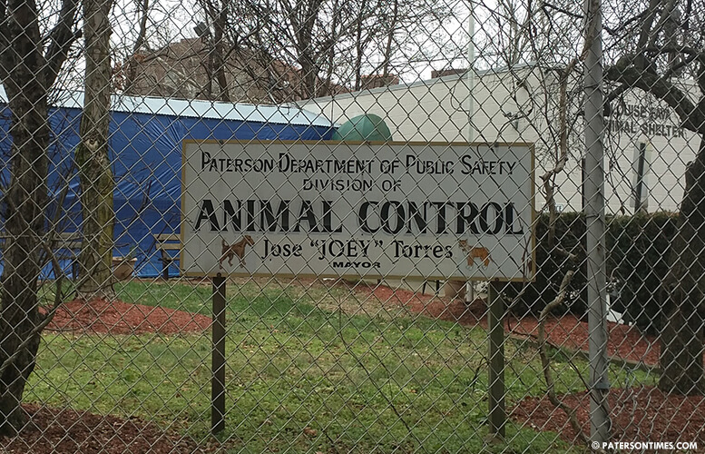 paterson-animal-control