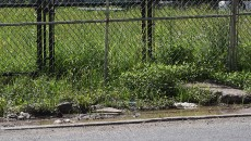 paterson-dog-park-sidewalk